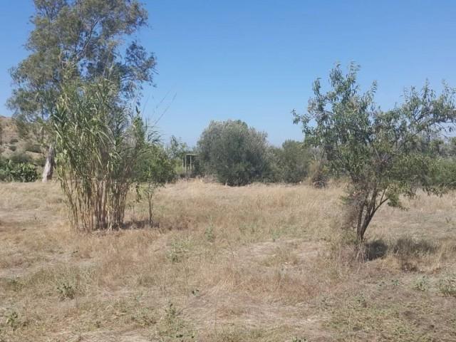 Yedidalga'da 3 Evlek 2000 Ayakkare Büyüklüğündeki Narenciye Bahçesi Satılıktır.