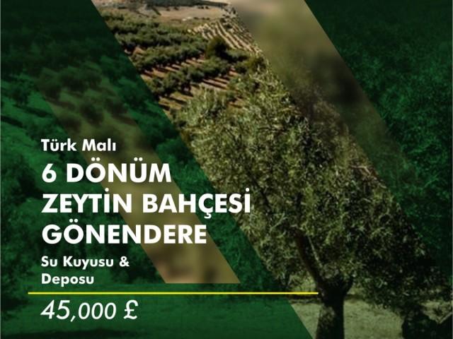 içerisinde 15 yıllık 350 tane zeytin ağaçlı olan satılık tarla